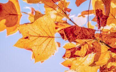 Herbstzeit in der TCM – Montags-Post #20